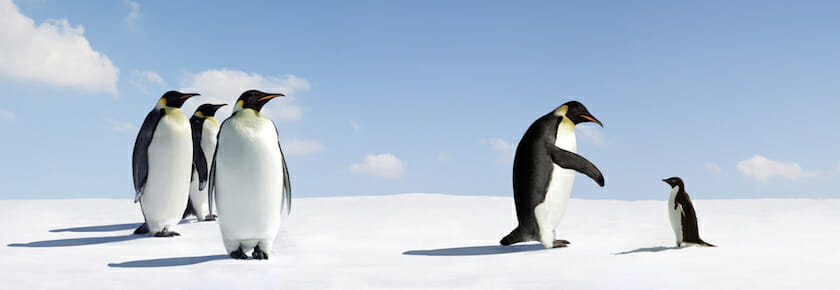 Google Updates Penguin Algorithm (Update Your Content Now!)