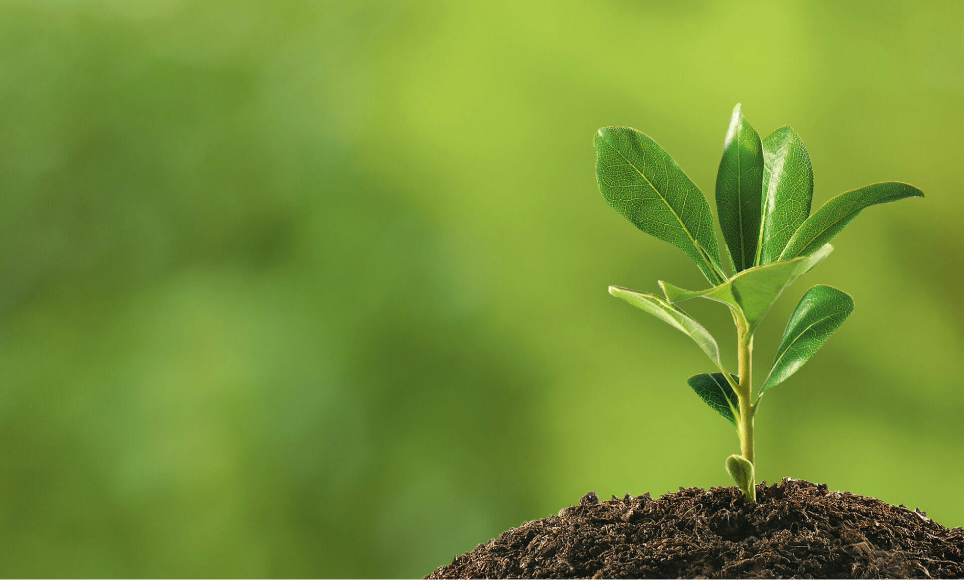 Plant Your Roots and Watch Them Grow: Creating Brand Evangelists